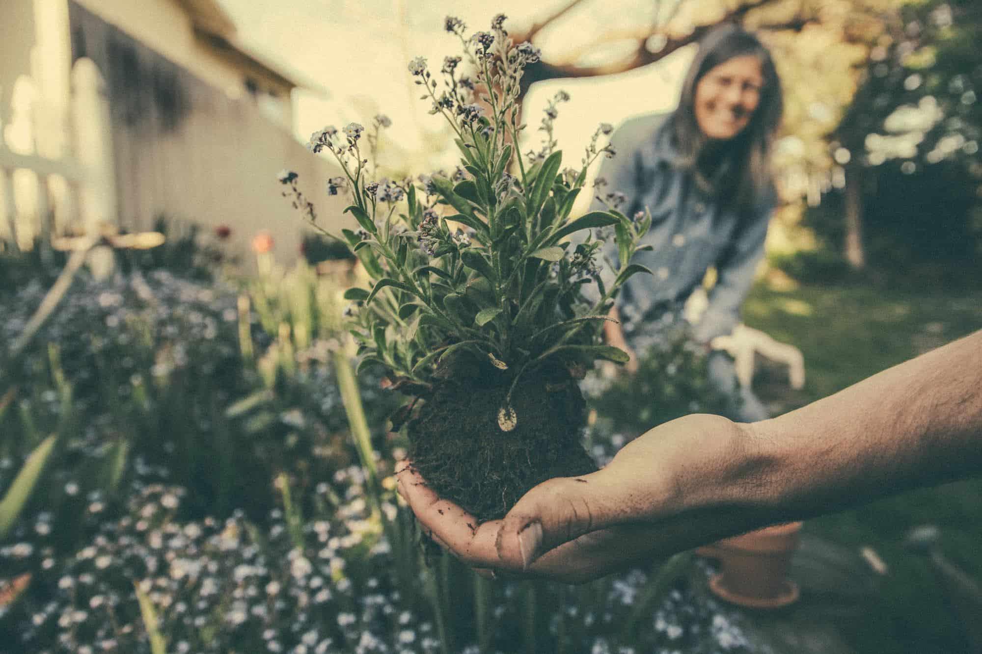 avoimet-puutarhat-tapahtuma-puutarhaliitto