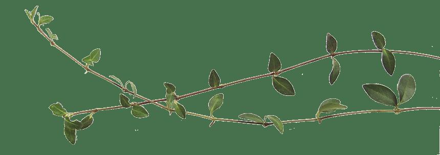 puutarhaliitto-trädgårdsförbundet